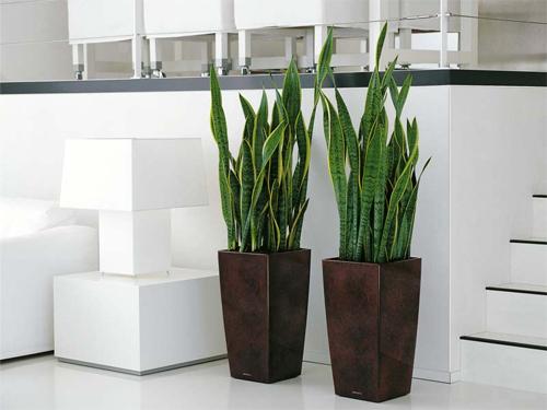 Растения в интерьере современного офиса