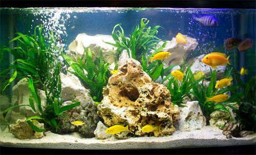 Выбираем фильтр для аквариума