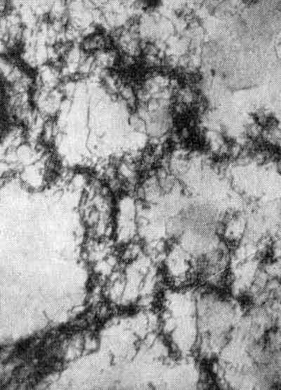 Ячеистая структура ромоциркониевой бронзы