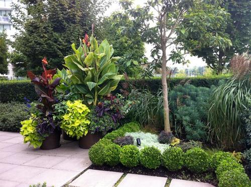 Как использовать растения в ландшафтном проектировании