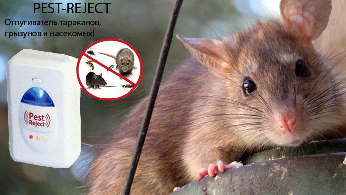 Отпугиватель мышей и комаров