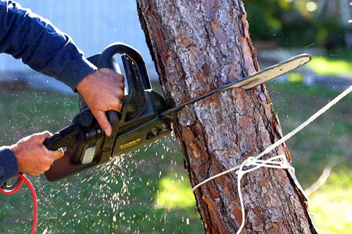 Стоимость валки деревьев в Москве и МО