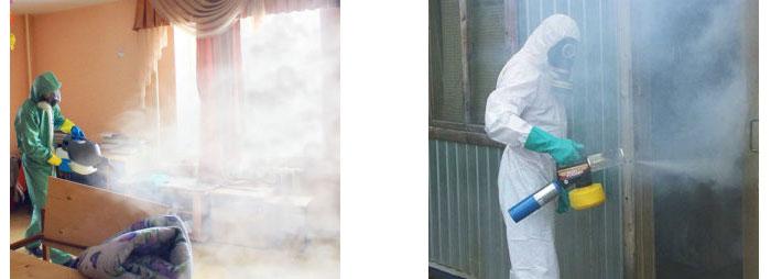 Санитарная служба в борьбе с вредными насекомыми в доме