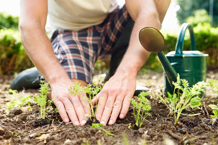 Основные правила садоводства