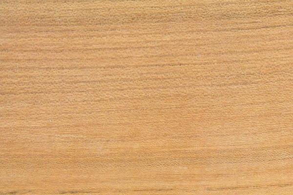 Вяз Гладкошерстный: свойства и способы обработки