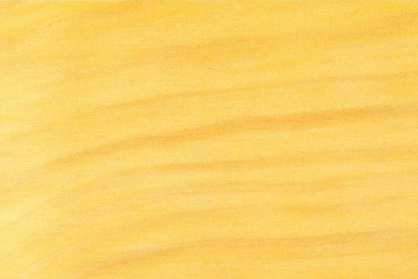 Ногоплодник Дакридиевидный: свойства и способы обработки