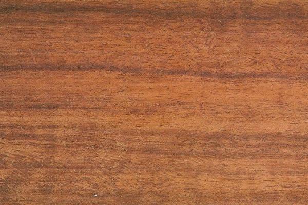 Эвкалипт Камальдульский: свойства и способы обработки