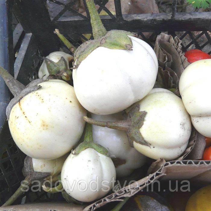 Семена овощных растений
