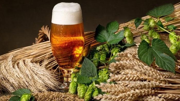 Зачем в пиво добавляют хмель?