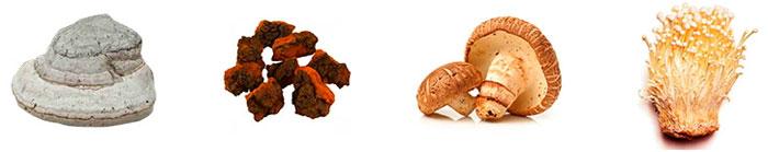 Лекарственные грибы