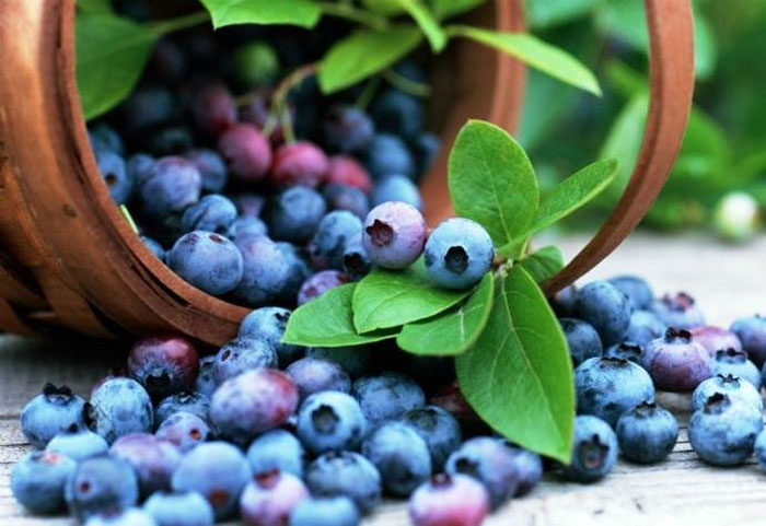 Как выращивать дикие ягоды на своем участке