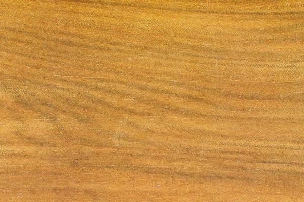 Орех Новой Гвинеи: свойства и способы обработки