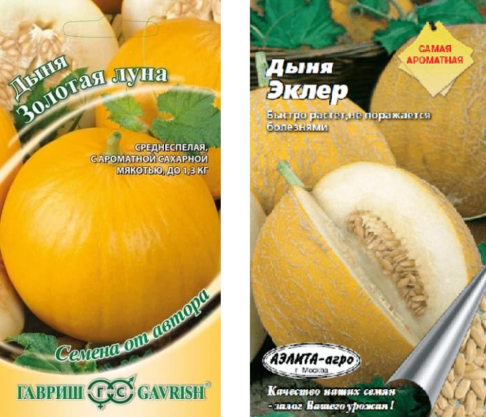Специфика выбора и хранения семян дыни