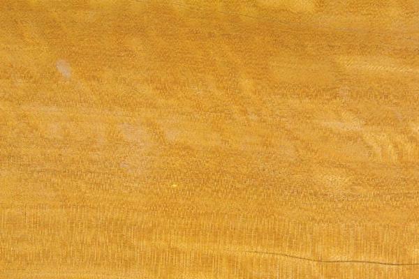 Цейлонское Сатиновое дерево