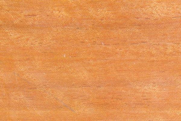 Квинслендский клен: свойства и способы обработки