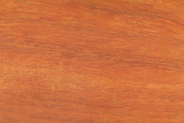 Падук Андаманский: свойства и способы обработки
