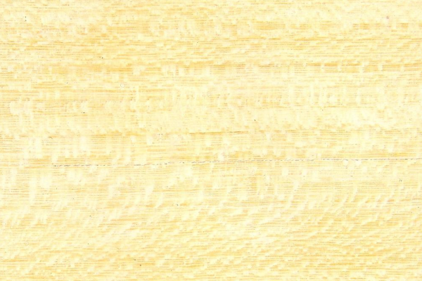 Птеригота Африканская