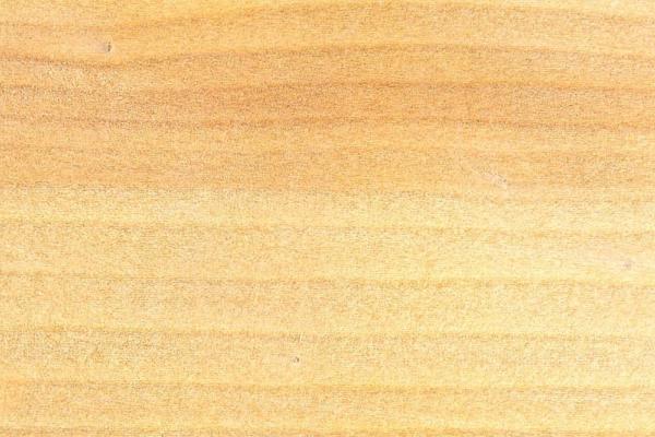 Сосна Парана