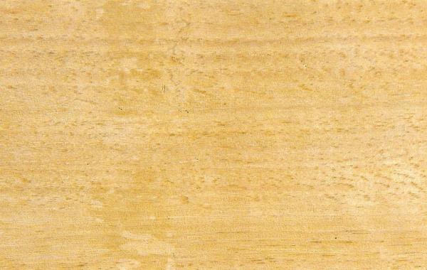 Тасманский Дуб: свойства и способы обработки