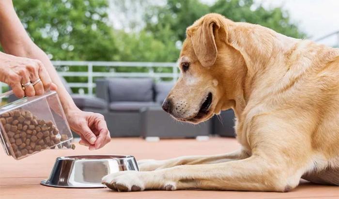 Как выбрать лучший корм беззерновой для собак