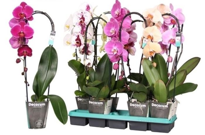 Популярные типы орхидей