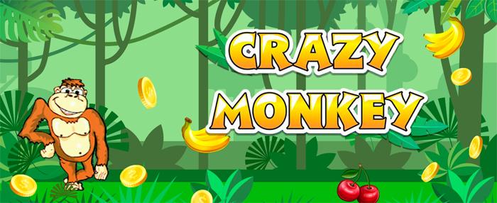 Клуб crazy-monkey: обзор и достоинства