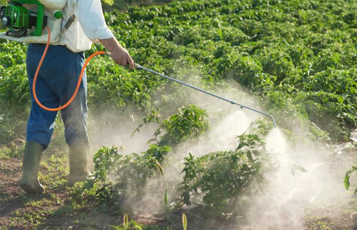 Как провести гербицидную обработку от сорняков