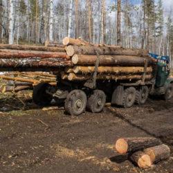 Как выбрать дрова для общественной бани?